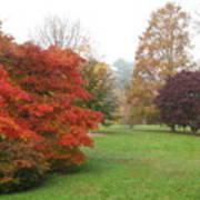Planting Fields Red Tree Art Print