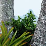 Plantside The Island Art Print