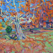 Platan Tree In Sunny Autumn Art Print