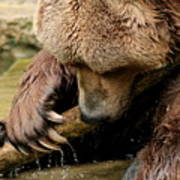 Play With Me Grizzly Art Print
