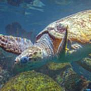 Playful Green Sea Turtle Art Print