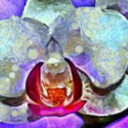 Playful Orchid Art Print