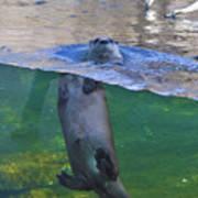 Playful Otter Art Print
