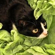 Playful Tuxedo Kitty In Green Tissue Paper Art Print
