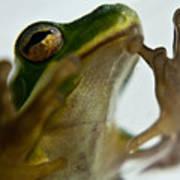 Please Not In A Frogs Eye Art Print