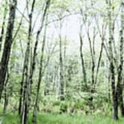 Pleasure Of Pathless Woods - Alt Art Print
