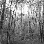 Pleasure Of Pathless Woods Bw Art Print