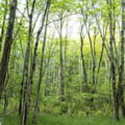 Pleasure Of Pathless Woods - Nat Art Print
