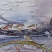 plovers in Jost VanDyke Art Print