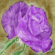 Plum Passion Rose Art Print