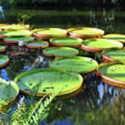 Pods Of The Pond Art Print
