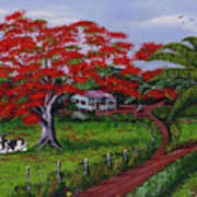 Poinciana Blvd Art Print