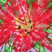 Poinsettia For Christmas Art Print