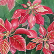 Poinsettia Magic Art Print