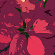 Poinsettias Work Number 4 Art Print