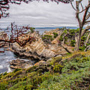 Point Lobos State Reserve Art Print