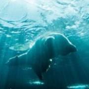 Polar Bear Swim Art Print
