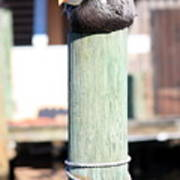 Pole Top Pelican Art Print