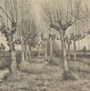 Pollard Birches Nuenen  March 1884 Vincent Van Gogh 1853  1890 Art Print