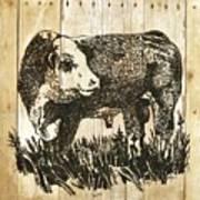 Polled Hereford Bull 11 Art Print
