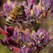Pollen Bees Art Print
