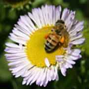 Pollen Harvest Art Print