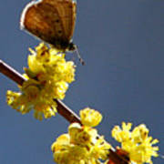 Pollen Pickup Art Print