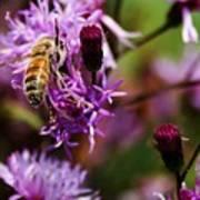 Pollen Powdered Bee Art Print