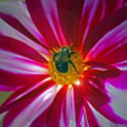 Pollenator Art Print