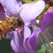 Pollinating 5 Art Print