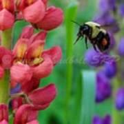 Pollination Art Print
