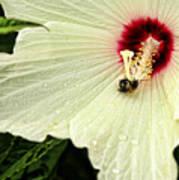 Pollinator Art Print
