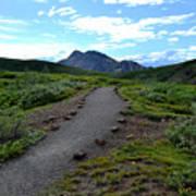 Polychrome Pass Trail, Denali Art Print