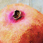 Pomegranate II Art Print
