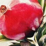 Pomegranate On A Pineapple Stalk Art Print