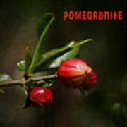 Pomegranite Art Art Print