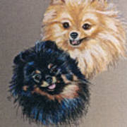 Pomeranian Pair Art Print