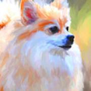 Pomeranian Portrait Art Print