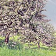 Pommiers Fleuris Art Print