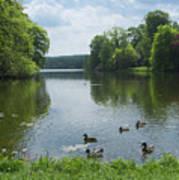 Pond And Ducks Art Print