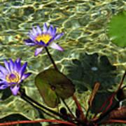 Pond Florals Art Print