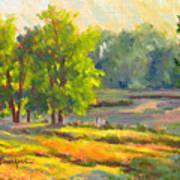 Pond In Morning Light Art Print