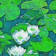 Pond Lily 2 Art Print