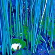 Pond Lily 6 Art Print