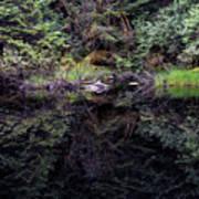 Pond Reflections -- Tongass National Forest Alaska Art Print