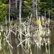 Pond Sticks Art Print