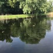 Pond With Ducks Art Print