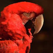 Pondering Parrot Art Print