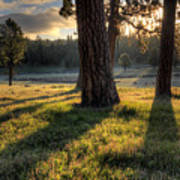 Ponderosa Pine Meadow Art Print