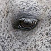 Pony Eye Art Print